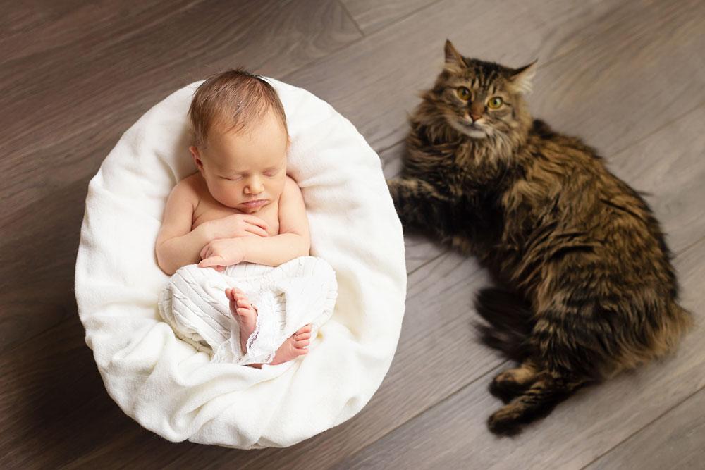 maine coon con bebé