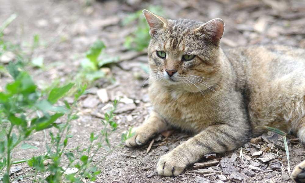 gato con mirada triste