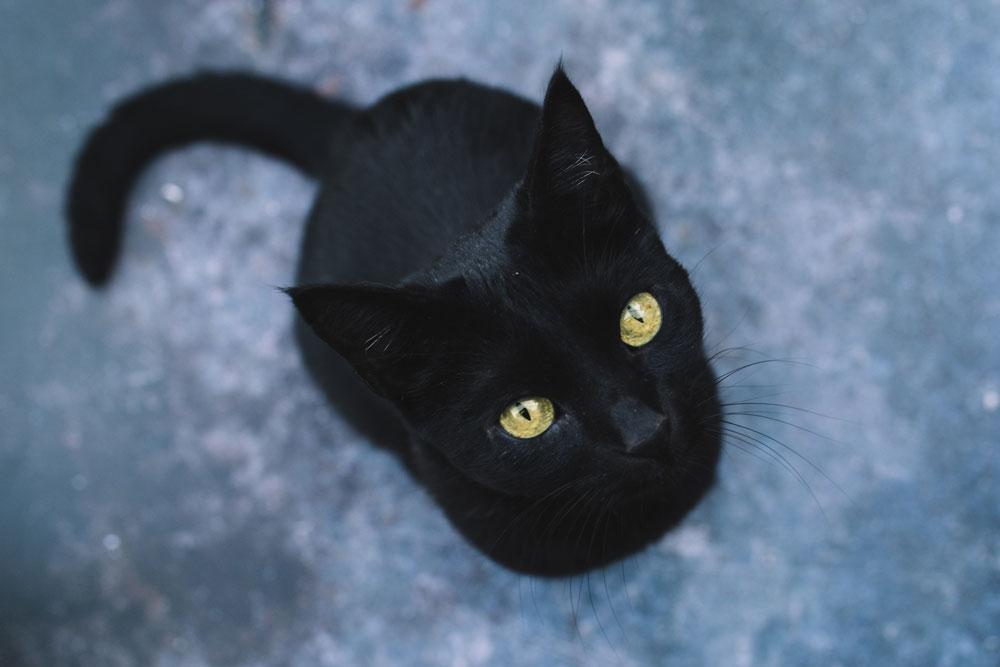 gato negro mirando hacia arriba