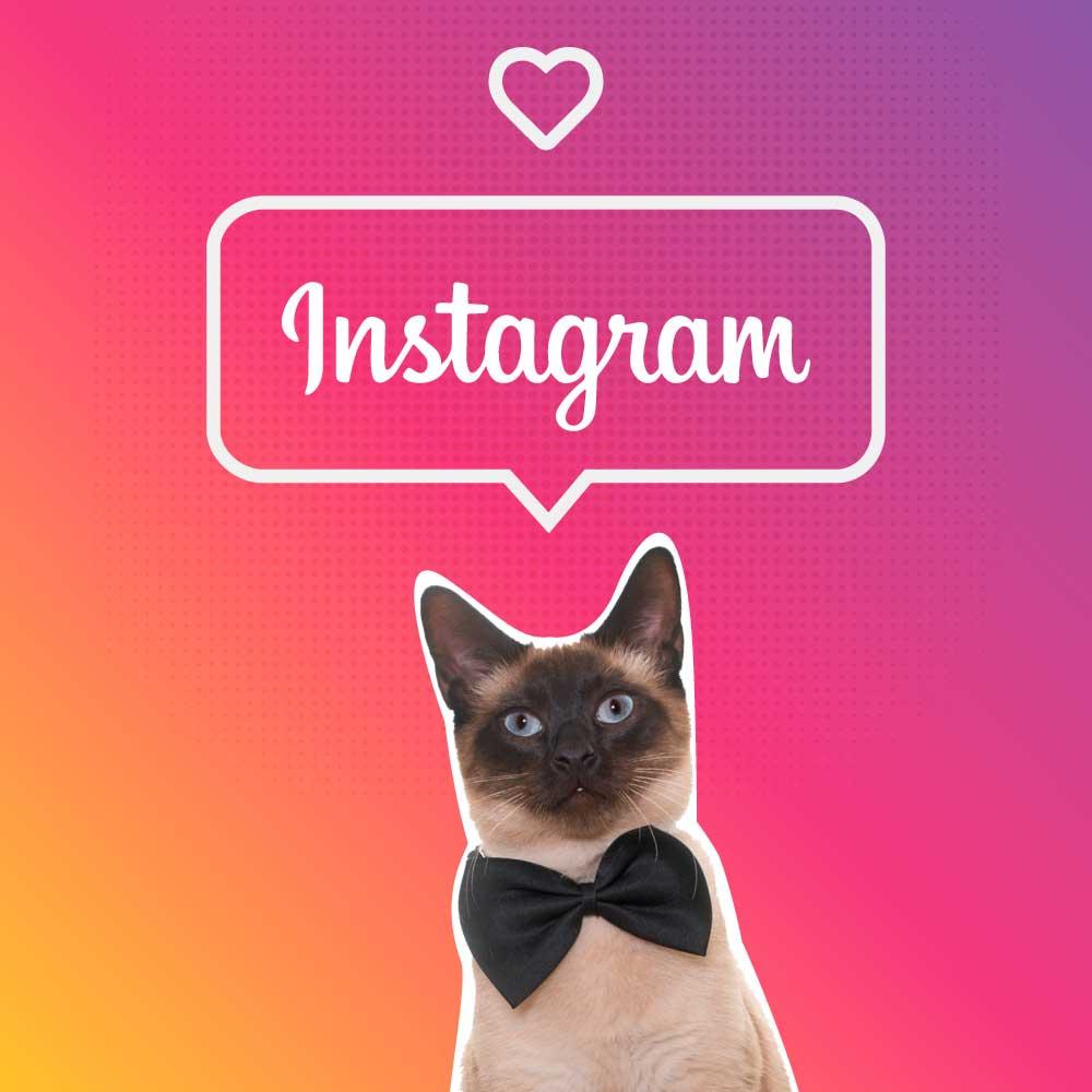 portada historias instagram