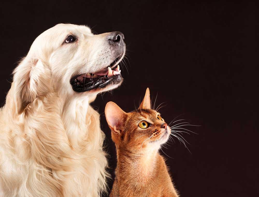 enseñar a convivir perro y gato