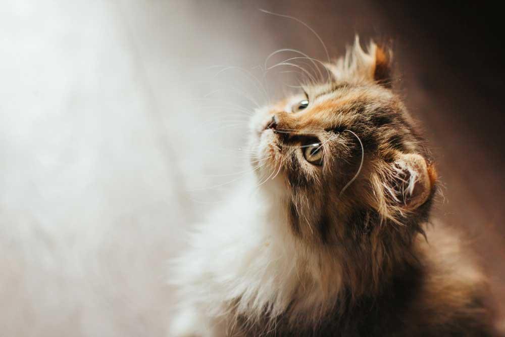 educar gato pequeño