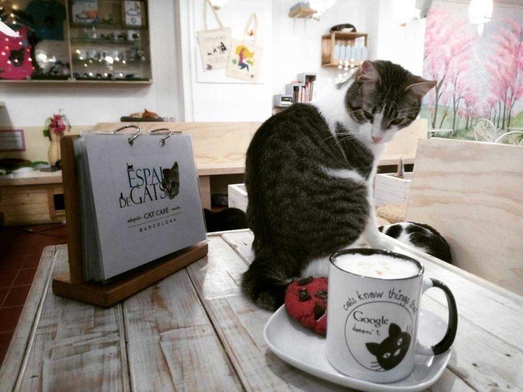 gato en el café de gatos