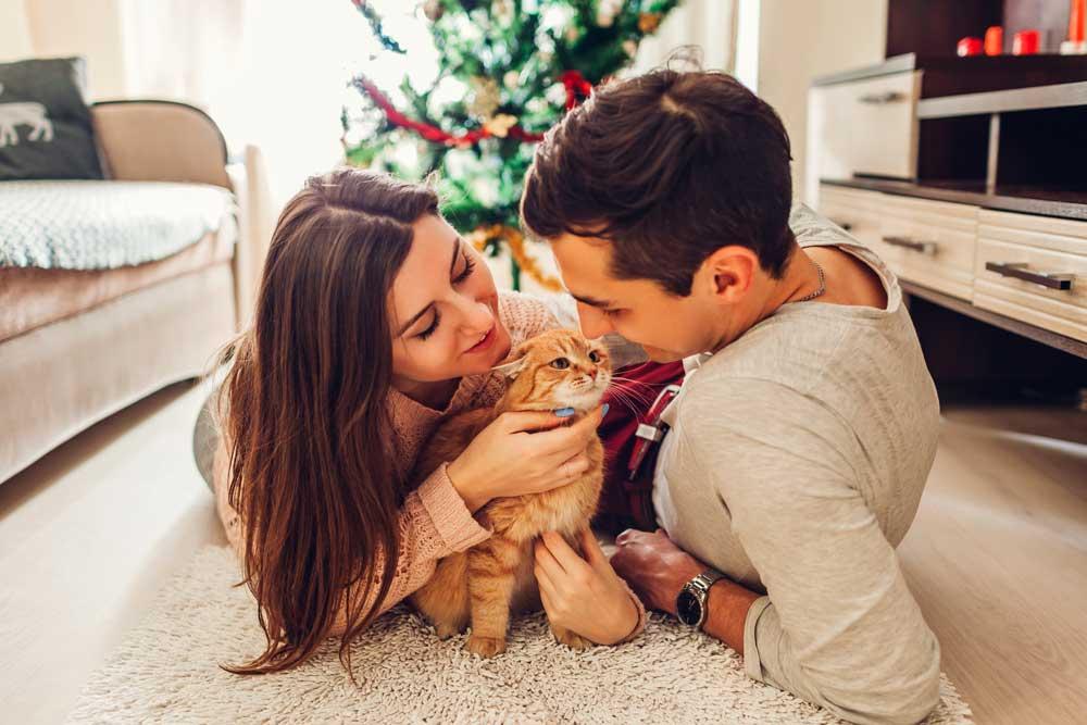 como educar un gato bebé