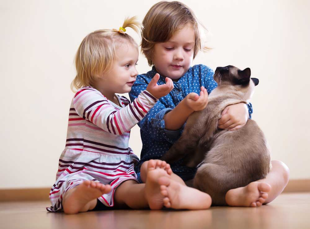 siames adoptado con niños