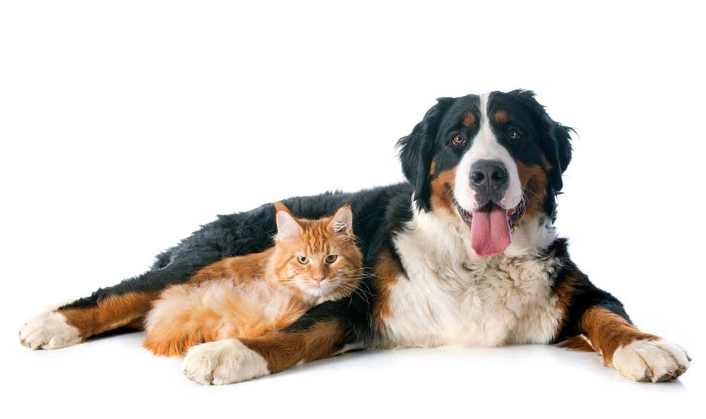 Gato tumbado con su amigo perruno