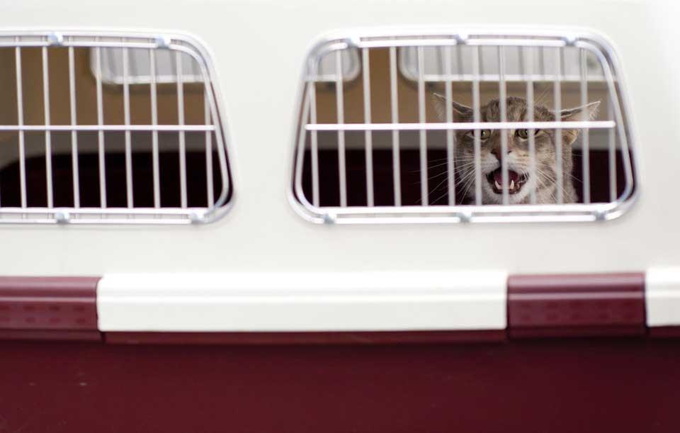transportín con gato
