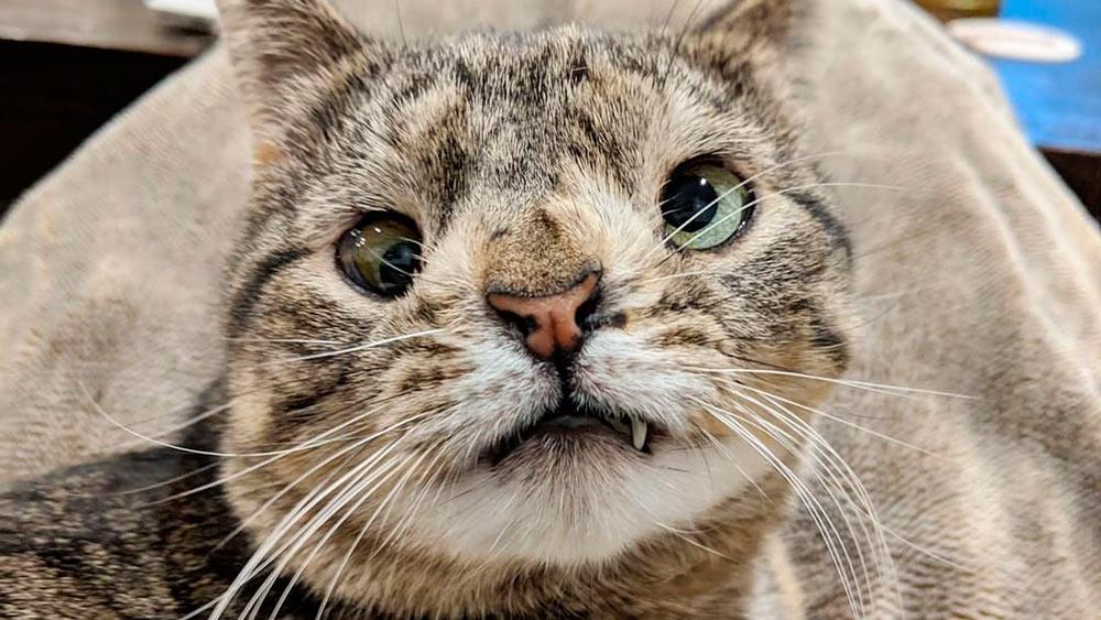 maya el gato con sindrome de down