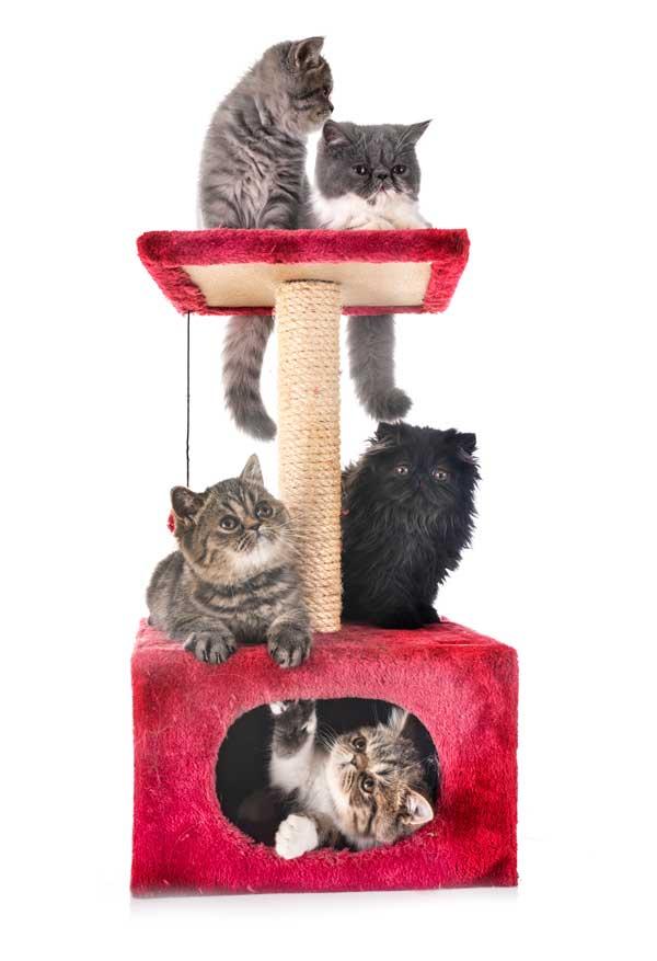 educar gato a usar el rascador