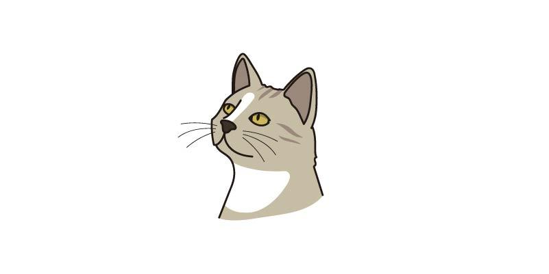 Lenguaje corporal gato cabeza