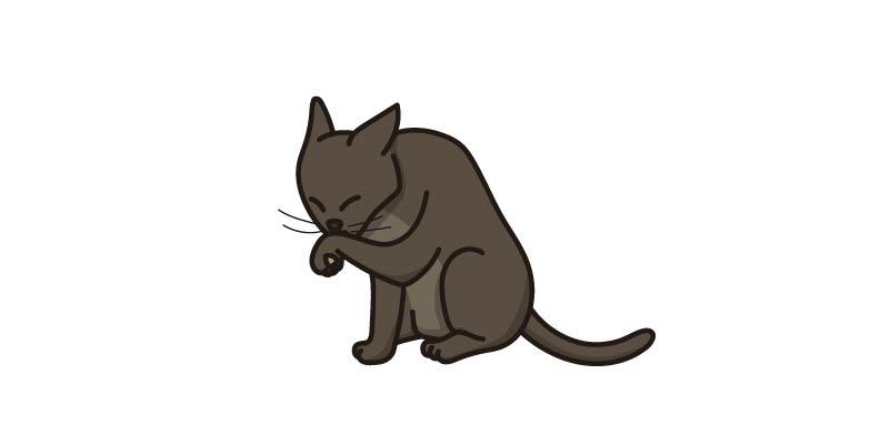 comportamiento gato se lame