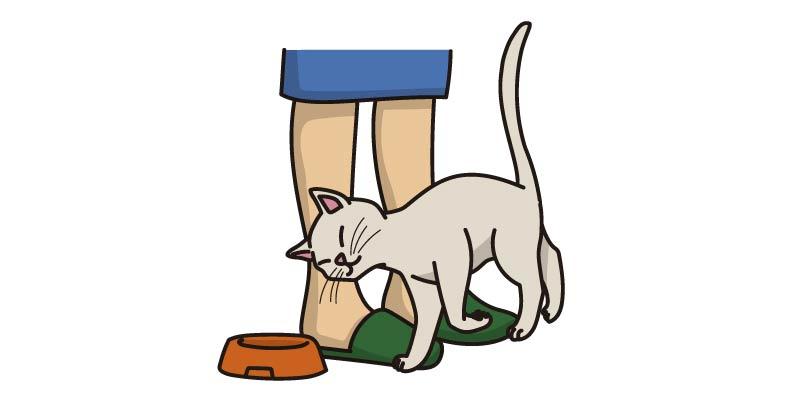 Comportamiento gato de frota