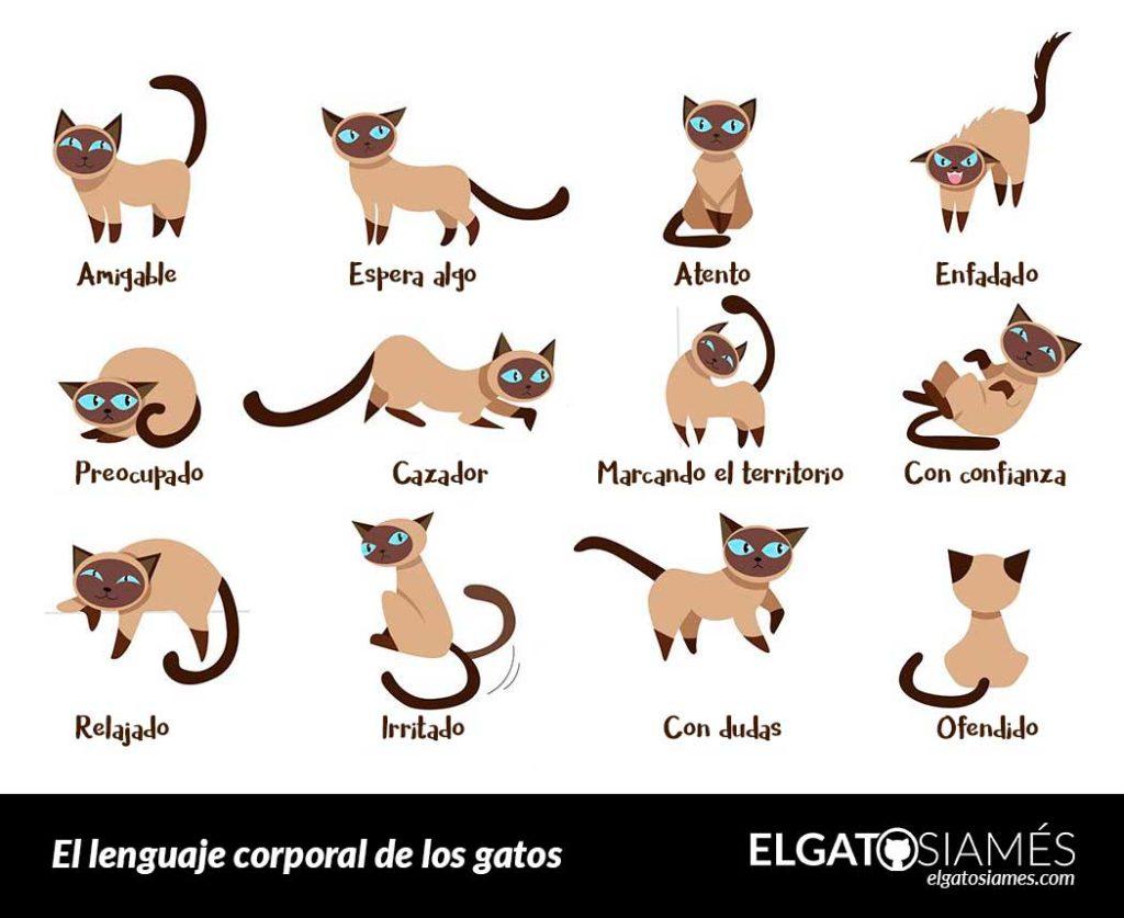 lenguaje corporal gatos
