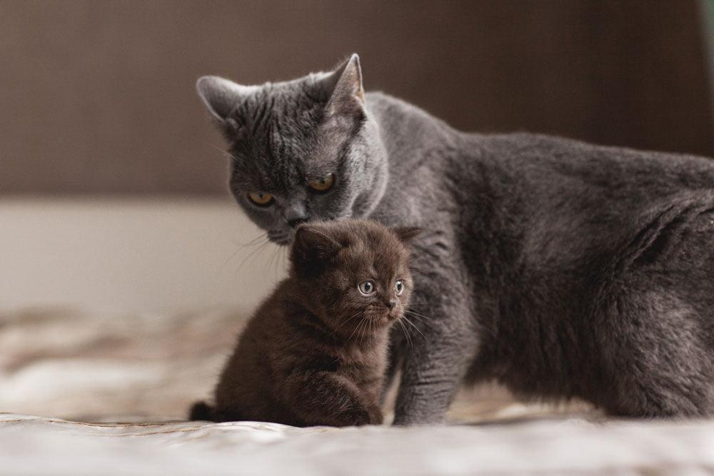 mama y gatito