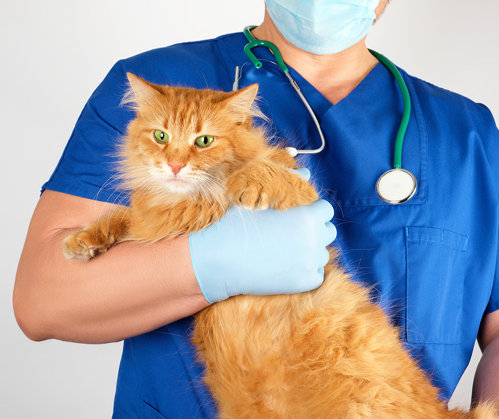 veterinario administrando medicación Retromad1 en gato