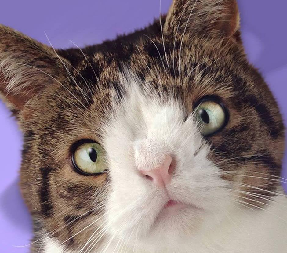 monty el gato con sindrome de down