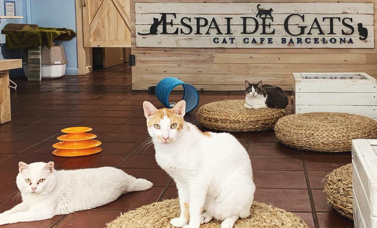 espai de gats