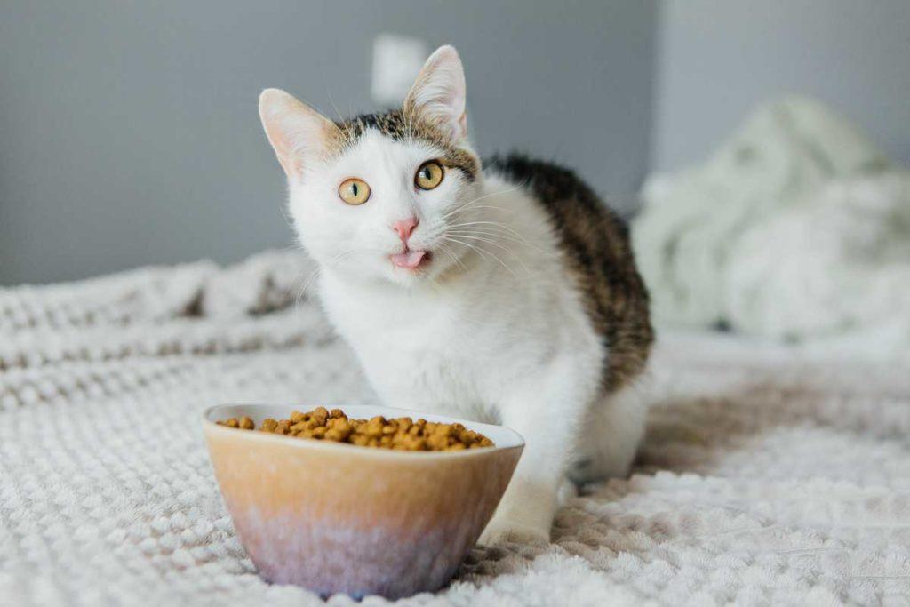 gato alimento pienso