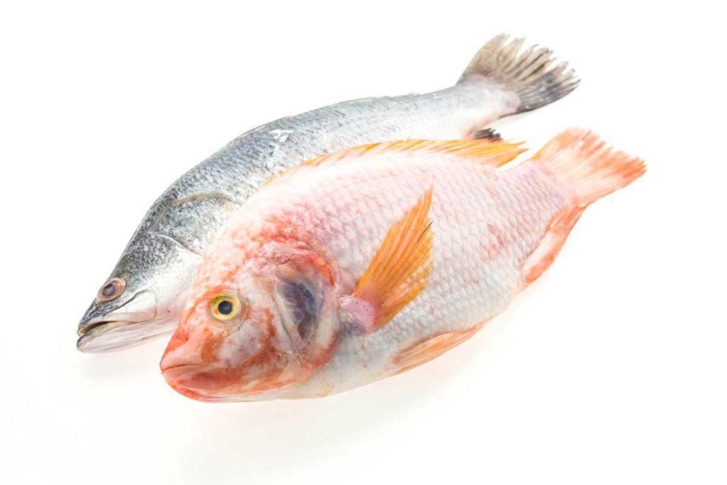 comer pescado crudo gato