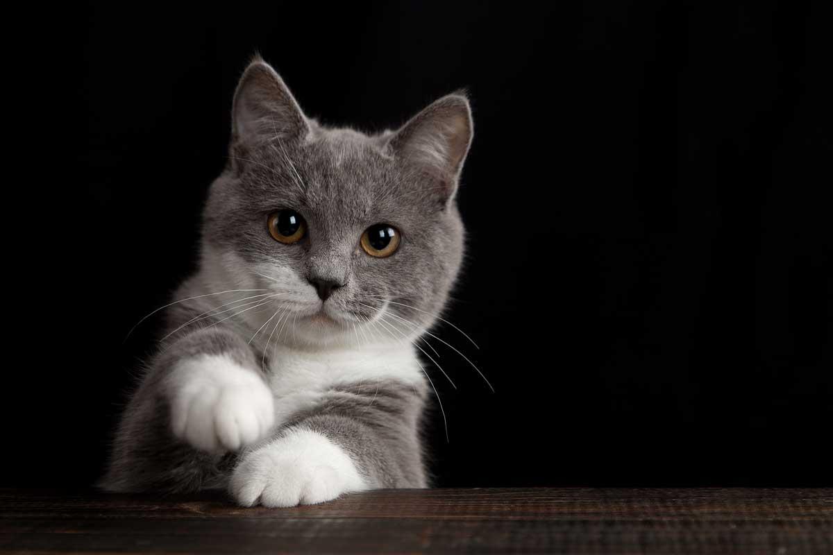 lenguaje gatos