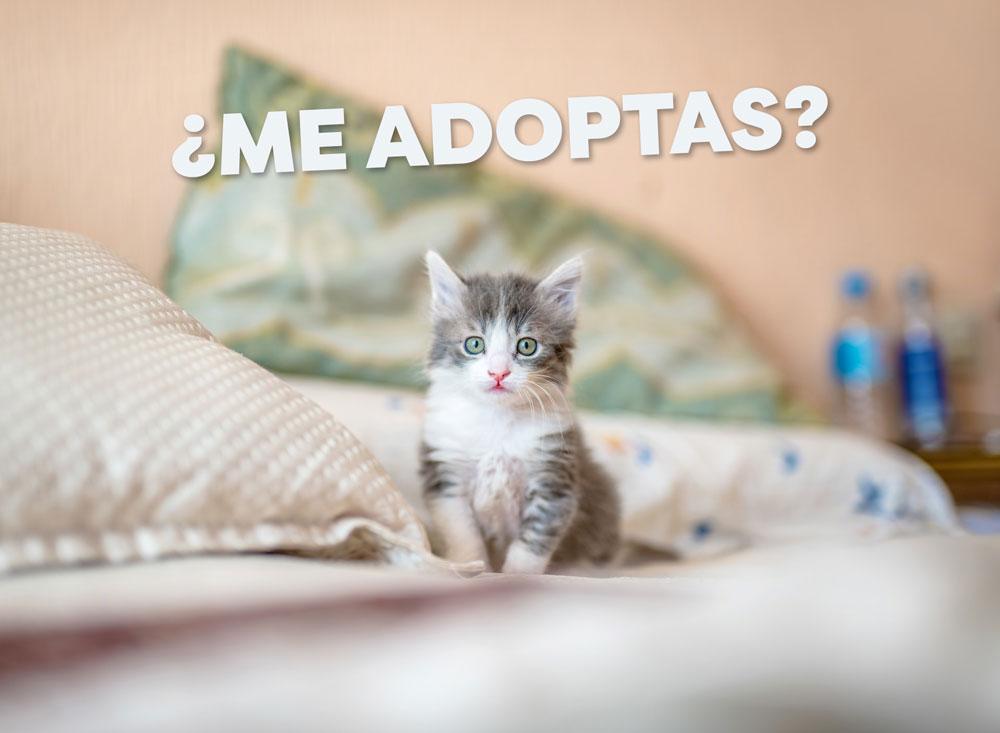 gatos en adopción en palmira